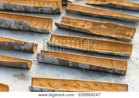 Fresh Cinnamon Sticks Drying In The Midday Sun