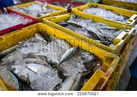 Fishes In Tac Cau Fishing Port, Me Kong Delta Province Of Kien Giang, South Of Vietnam