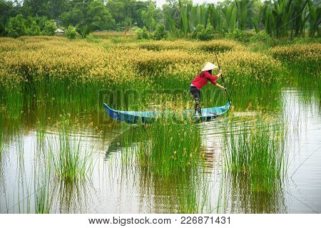 Mekong Delta Landscape With Vietnamese Woman Rowing Boat On Nang - Type Of Rush Tree Field, South Vi