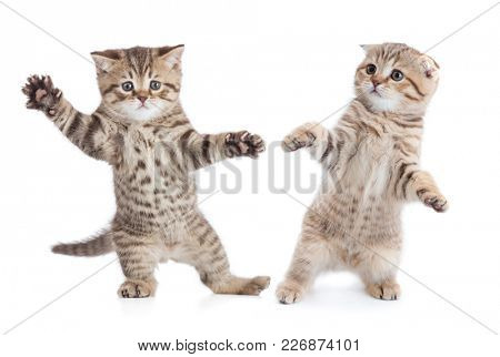 Funny young cats dancing isolated