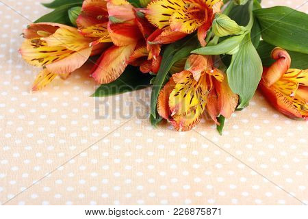 Alstroemeria Flower On A Background Of Polka Dots, Top View. Peruvian Lilies. Empty Space For Your T