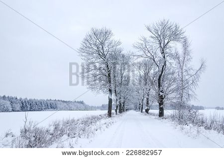 Winter - Fields And Road Covered With Snow