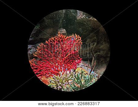 Closeup Underwater Scene In Sphere Shape Isolated On Black Background, Clipping Path