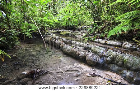 A Stream Flows Through Dense And Lush Jungle And Over Rounded Rock Formations In Southern Belize.