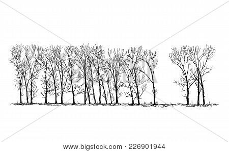 Cartoon Vector Doodle Drawing Illustration Of Group Or Alley Of Broadleaved Or Deciduous Poplar Tree