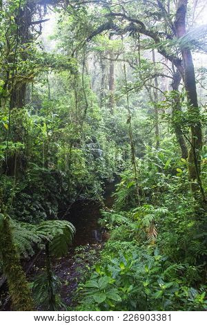Fog Fills The Monteverde Cloud Forest In Costa Rica.