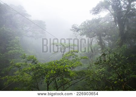 The Middle And Upper Canopy Of The Lush Monteverde Cloud Forest In Costa Rica, With Typical Dense Cl