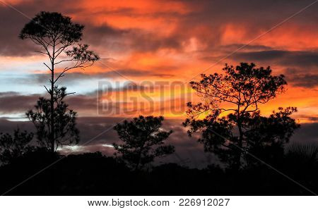 Sunset Over The Grassland With Tall Sparse Trees, Southern Belize.