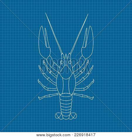 Lobster. Hand Drawn Sketch On Blueprint Background. Vector Illustration