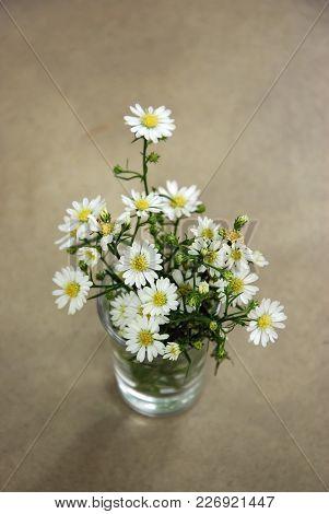 White Little Daisy Flower, A Select Focus Close Up Photo Image Of White Little Daisy Flower In A Sma