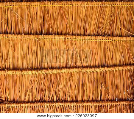 Blady Grass Roof, A Close Up Photo Image Of Blady Glass Roof Present  A Detail Of Pattern And Textur