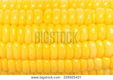Corn Seed On A Corncob