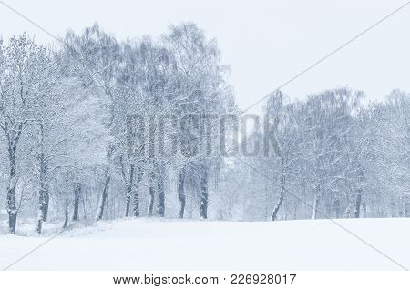 Winter - Field And Wayside Trees Covered With Snow