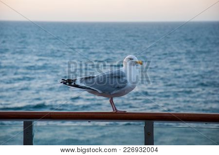 Seagull Sitting On A Guardrail On A Ferry