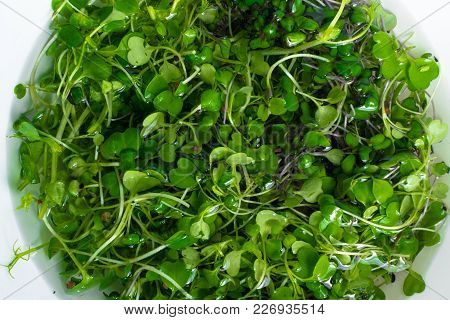 Micro Salat From Sprouts Of Radish And Arugula In Water