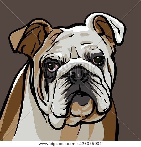 Dog Bulldog. A Sad Bulldog Dog With A Wise Look. Illustration