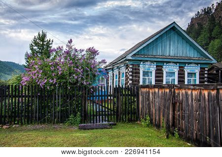 Traditional Russian Old Country Wooden House With Fence And Amazing Lilac In Cloudy Day
