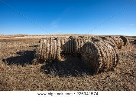 Hay Bundles In The Field Under A Clear Blue Sky Near Davenport, Washington.