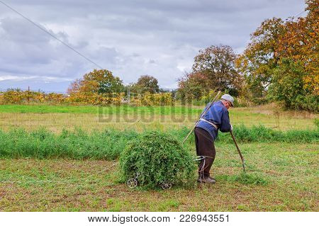 Old Man Mowing Down Grass With Scythe Farmer Mows The Grass