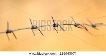 Barbed Wire As A Background . In The Park In Nature