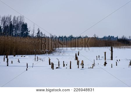 Frozen Naked Dry And Dead Forest Trees In Snowy Landscape