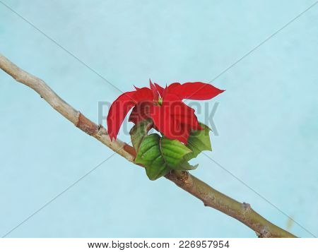 Small Plant With Red Leaves Attached To A Branch