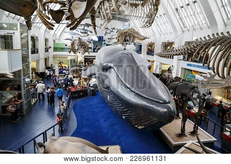 London, Great Britain - May 22, 2014: This Is The Hall Of Mammals In The Museum Of Natural History.