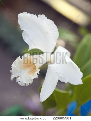 Branch Of Blooming Orchid Close Up In Sunny Day