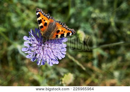 Closeup Butterfly In Garden On Blue Color Flower