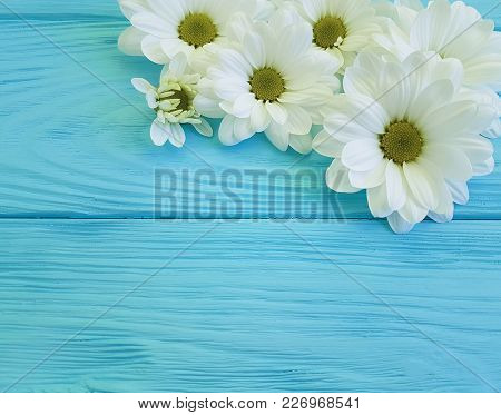 White Chrysanthemum On Blue Wooden Frame, Birthday, Color, Concept, Rustic, Design, Tenderness, Autu