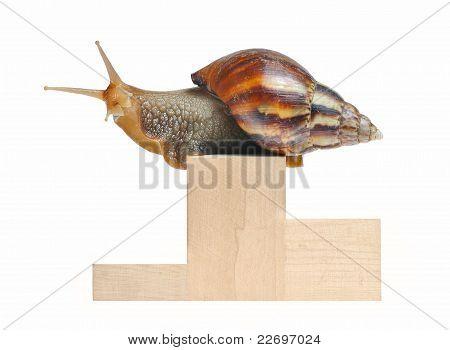 Big Snail On Podium Isolated