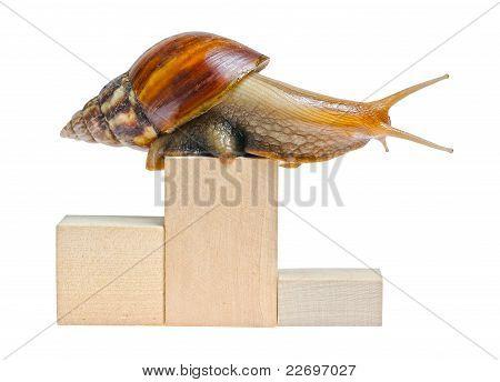 One Snail On Empty Podium Isolated On White