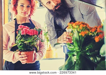 Redhead Female Holds A Pot With Roses And Bearded Tattooed Male Watering Flowers In Market Shop.