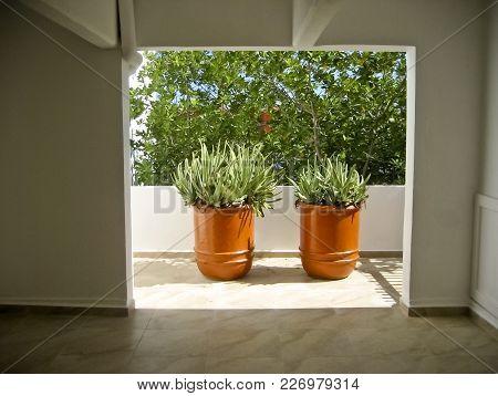 Two Potted Aloe Plants In Open Doorway Interior