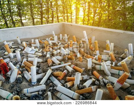 Cigarette Butts,smoked In Ashtray Is Bad For Your Health