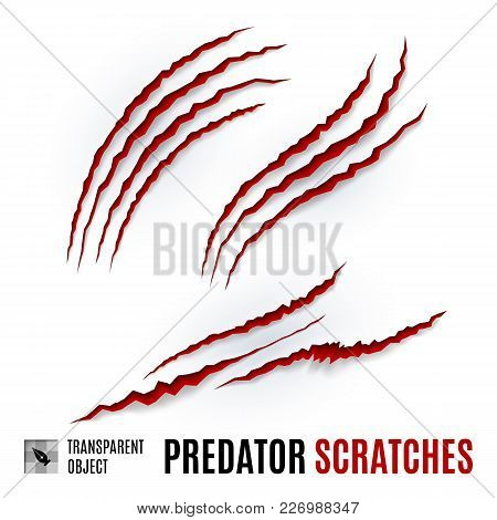 Animal Red Scratches On White Background. Claw Scratch Mark. Paper Claws Animal Scratching. Horror S