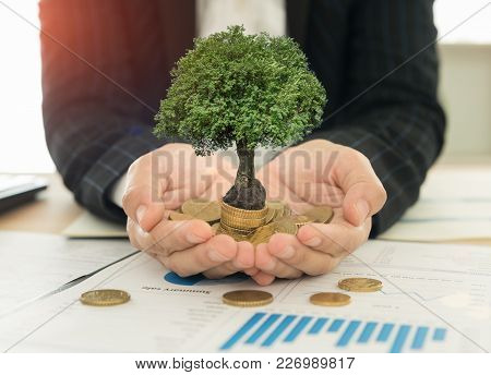 Investment Growth Concept, Business People Holding Tree Grow On Coin Stack. Investing Success.