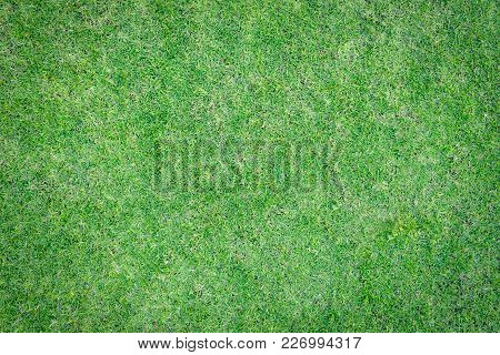 Natural Grass Texture Pattern Background Golf Course Turf Lawn From Top View In Bright Yellow Green