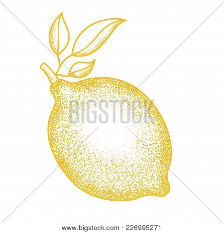 Vintage Ink Hand Drawn Citrus Fruits Sketch. Vector Illustration Of Highly Detailed Citrus Fruits In