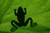 the frog's shadow on background of leaf poster