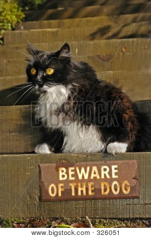 Beware Says Kitty
