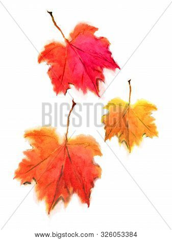 Falling Autumn Maple Leaves In Red And Orange, Isolated On A White Background. Watercolor Drawing