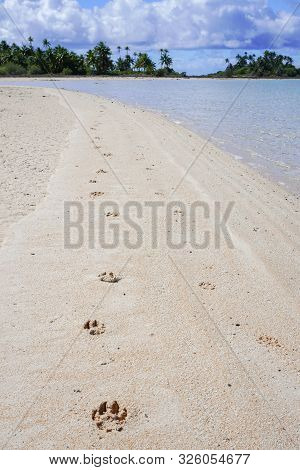 Dog Pawprints In White Sand Along A Lagoon With Palm Trees In The Background