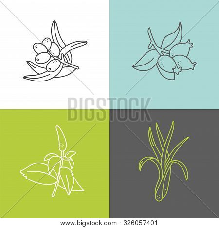 Vector Set Design Colorful Templates Logo And Emblems - Organic Herbs And Teas. Different Teas Icon-