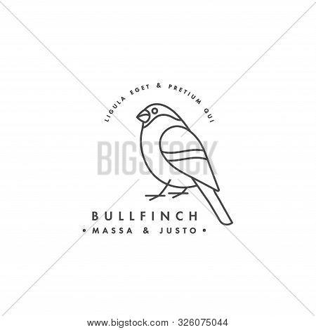 Vector Linear Logo Design Bullfinch On White Background. Bullfinch Emblems Or Badges.