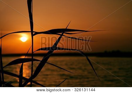 Orange Sunset Over Water, The Silhouette Of The Leaves Of Coastal Grass And Sun Track Background Ima