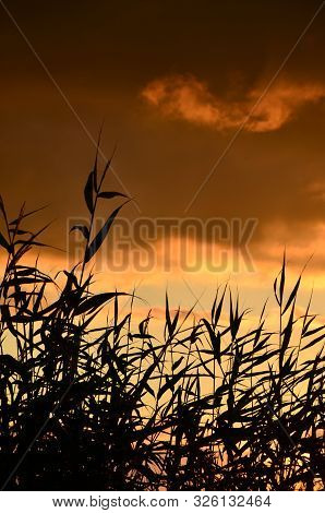 Orange Sunset Coastal And Grass Of Thickets