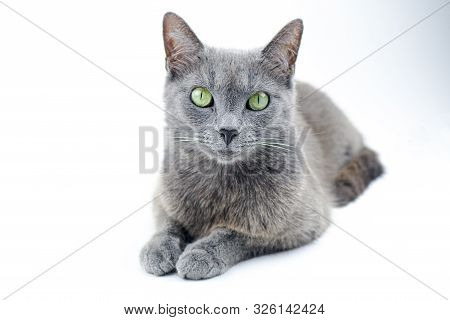 Adorable, Animal, Animals, Background, Beaut, Beautiful, Breed, Cat, Curious, Cute, Domestic, Domest