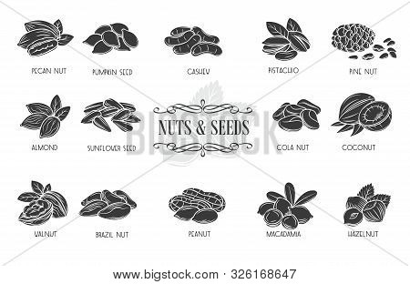 Nuts And Seeds Glyph Icons. Cola Nut, Pumpkin Seed, Peanut And Sunflower Seeds. Pistachio, Cashew, C