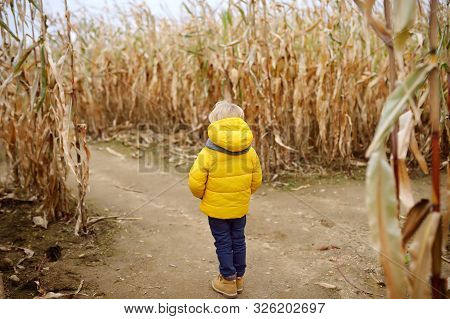Little Boy During Tour On Pumpkin Fair At Autumn. Child Decide Which Way To Go Among The Dried Corn